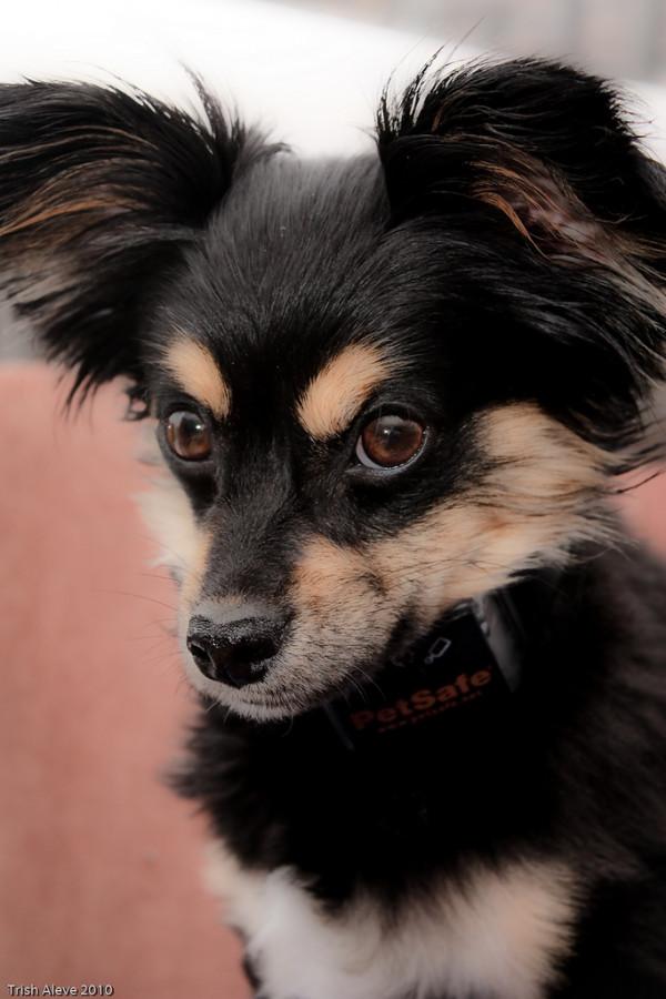 7 smarte gadgets der stopper din hunds gøen